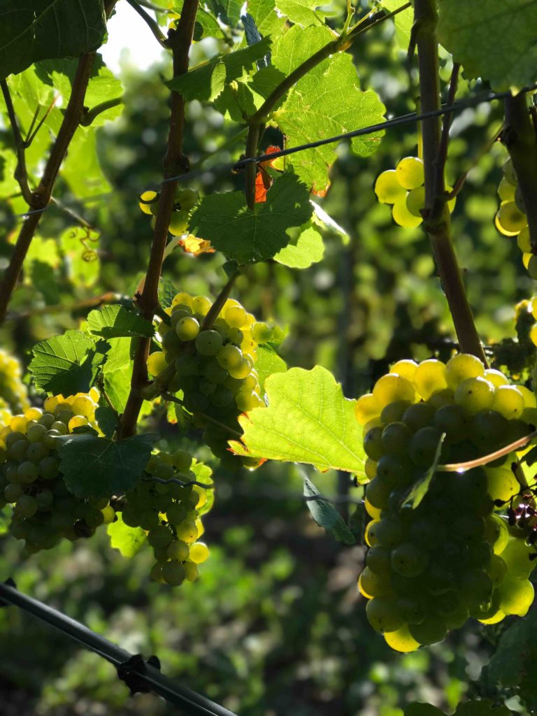 Griechischer Wein | Grieche Nürnberg